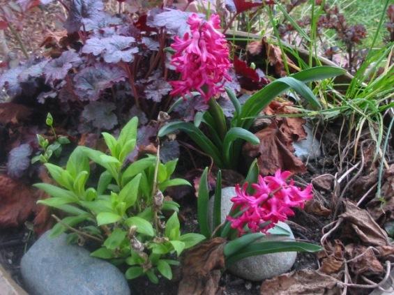 spring-002_small.jpg